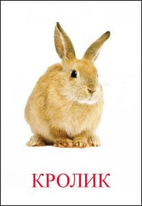 Кролик картинка для детей