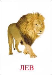 лев картинка для детей