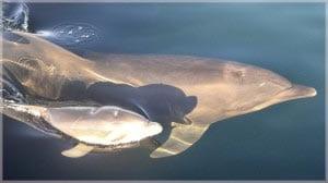 мама и малыш дельфины