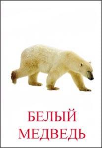 Белый медведь картинка для детей 1