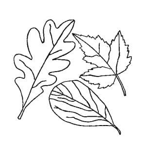 """Раскраска """"осенние листья"""" с листом дуба и калины"""