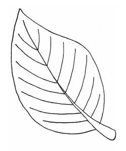 раскраска лист 4