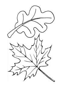Раскраска лист дуба и лист клена