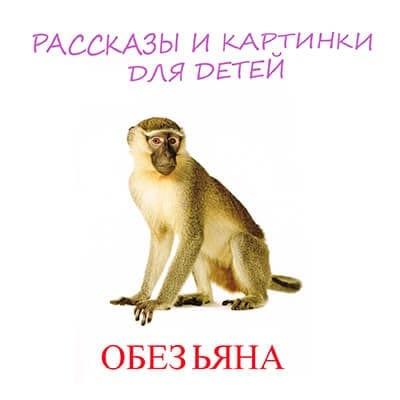 обезьяна картинка