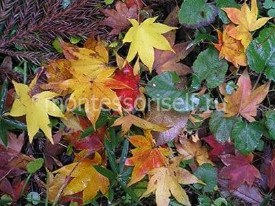Осенние литья - сама природа вдохновляет
