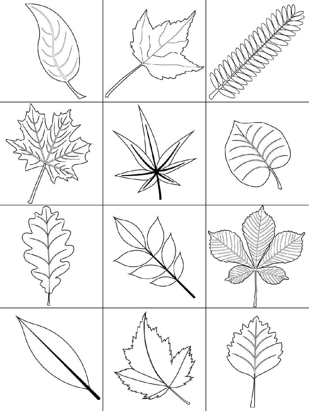 Осенние листья (карточки)