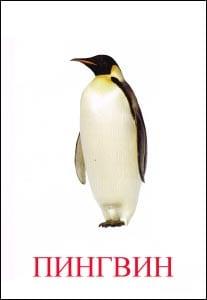 Пингвин картинка для детей 1