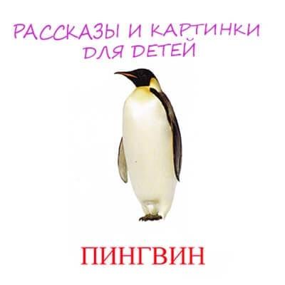 пингвин картинка