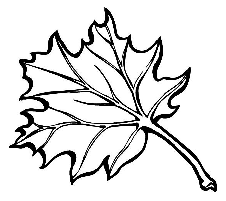 Раскраска осень - листья, деревья, урожай, фрукты, овощи