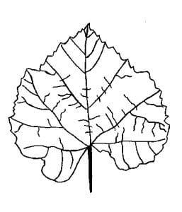 раскраска лист
