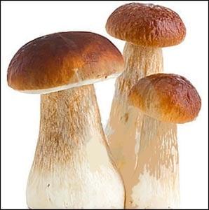 Картинка белый гриб для детей