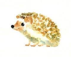 drawing hedgehog 6