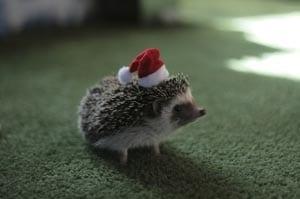 photo hedgehog for children 6
