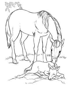 раскраска лошадь с жеребенком 2