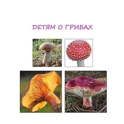 Детям о грибах – грибные картинки и рассказы