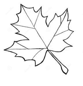 Раскраска лист клена
