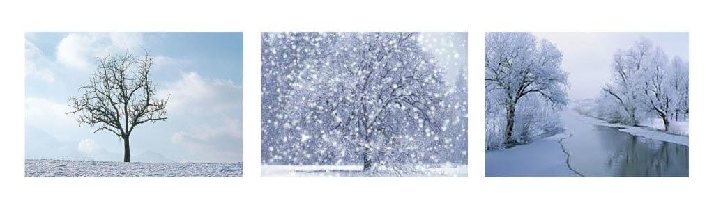 Природа зимой картинки для детей