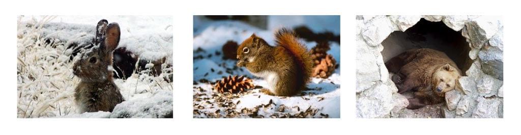 Животные зимой картинки для детей