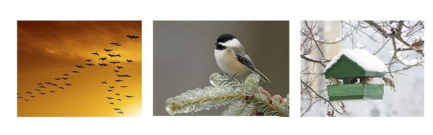 Птицы зимой картинки для детей