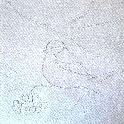 "Рисунок карандашом ""Снегирь"""