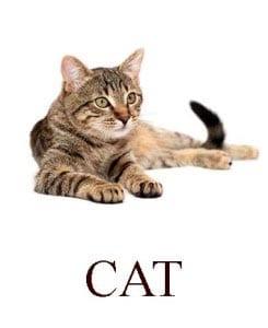 Кошка на английском для детей