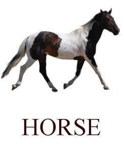 Лошадь на английском для детей