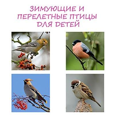 Зимующие и перелетные птицы – картинки с названиями для детей