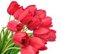 Букет тюльпанов для мамы
