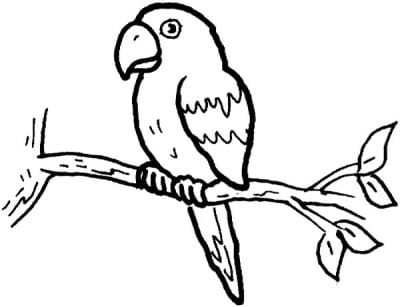 Parrot on the branch