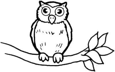 Раскраска сова на ветке