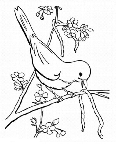 Птичка принесла червяка