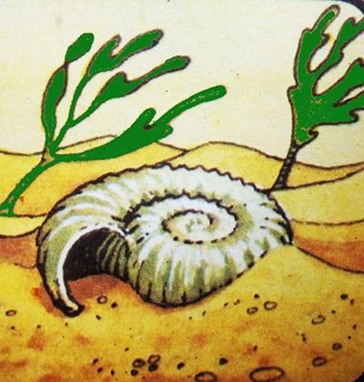Раковина покрывается слоем песка
