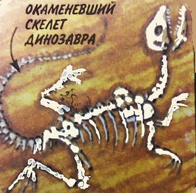 Окаменевший скелет динозавра