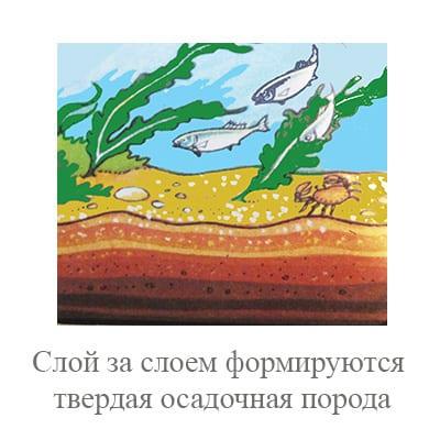 Слой за слоем формируется осадочная порода на дне моря