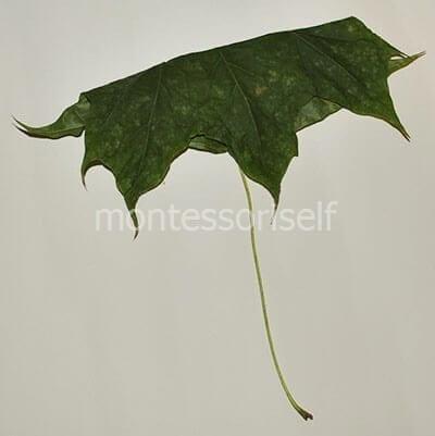 Складываем листок