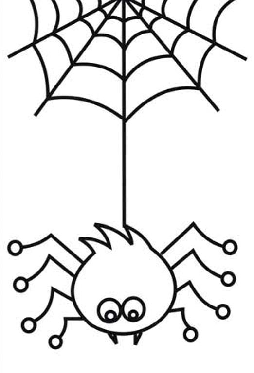 Раскраска паук и паутина