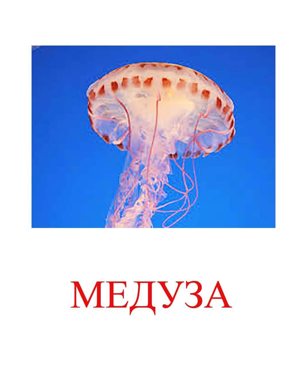 медуза картинка для детей