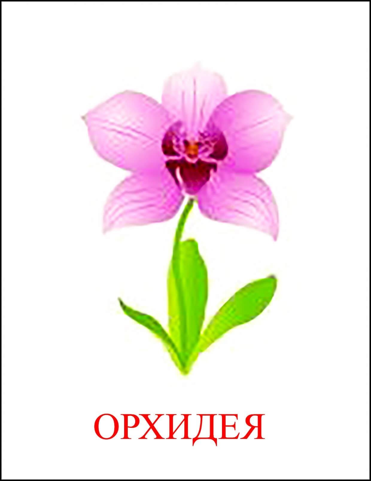 Орхидея картинка для детей