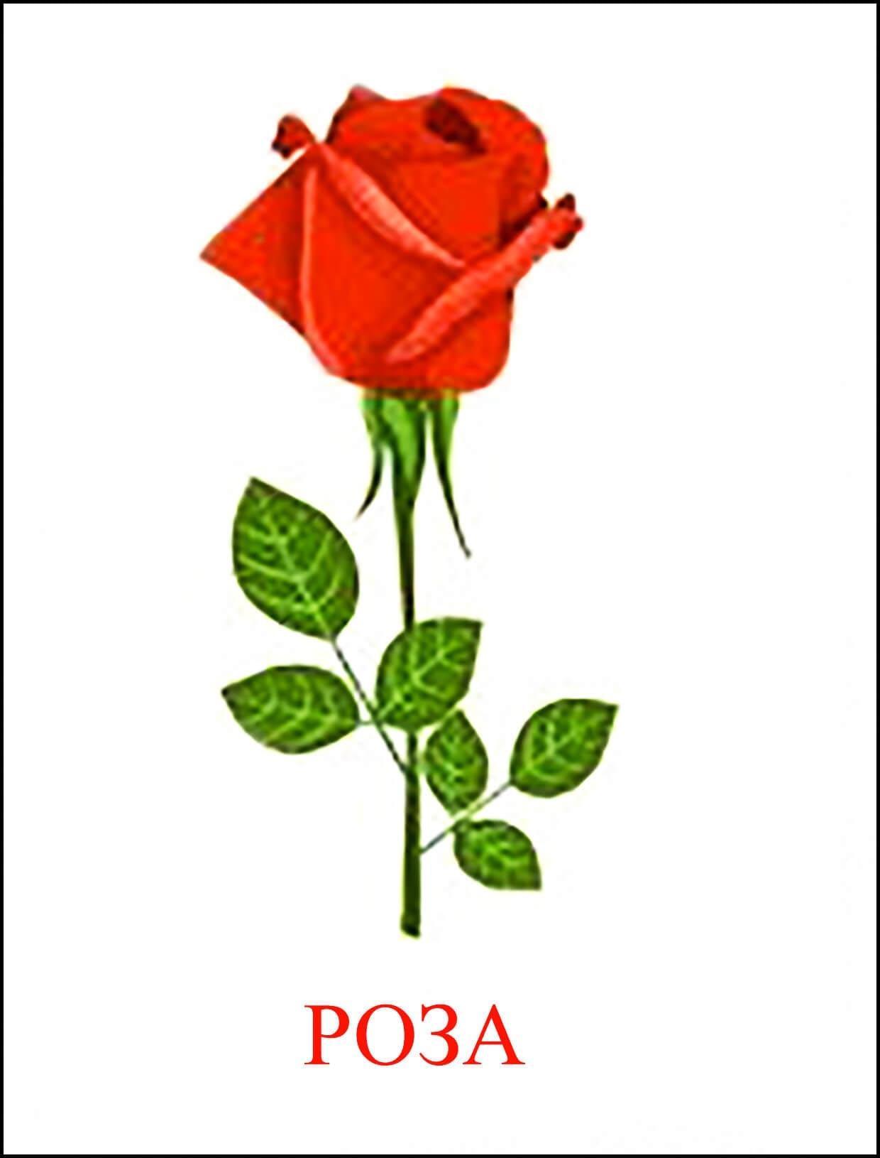 Роза картинка для детей