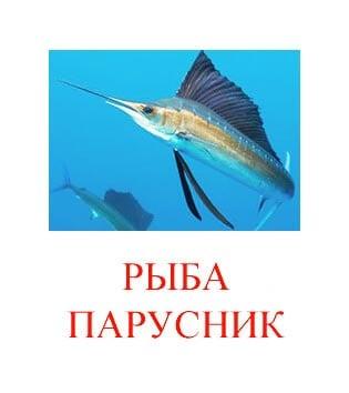 Рыба парусник картинка для детей