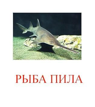 Рыба пила картинка для детей