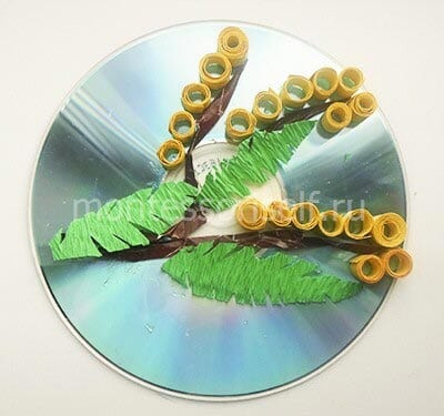 Мимоза с листьями