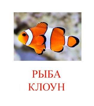Рыба клоун картинка для детей