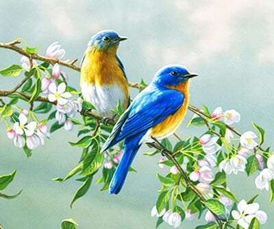 Весенние птички картинка 2