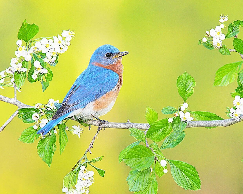 Весенние птички фото 1