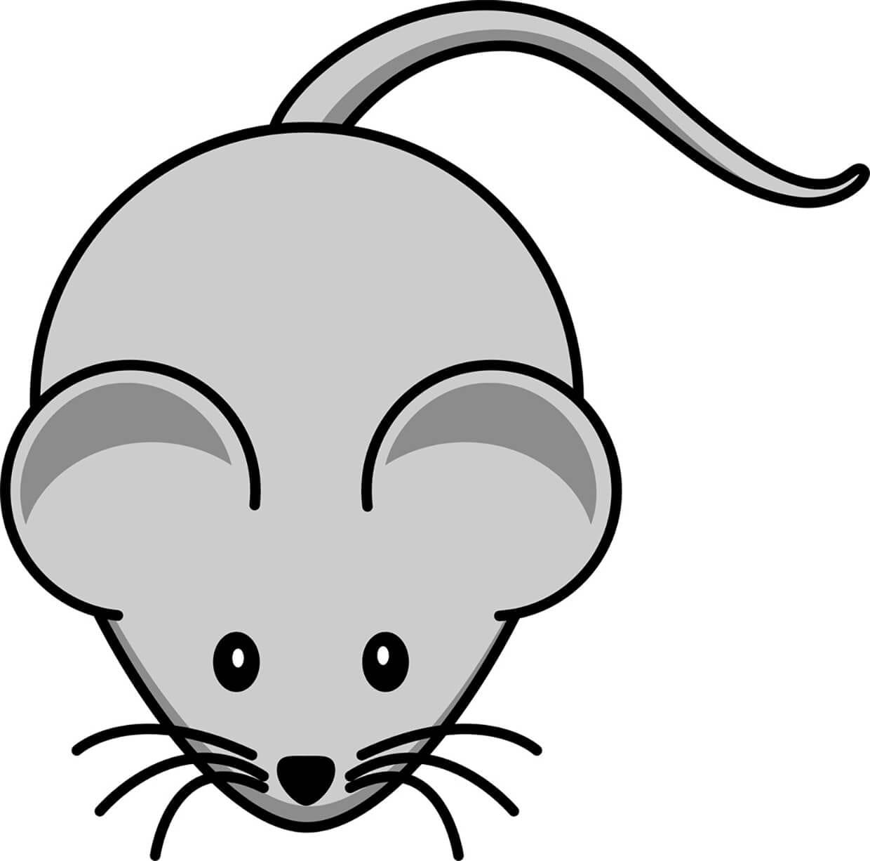 Мышка картинка для детей 2