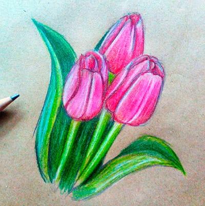 Рисунок тюльпаны для мамы