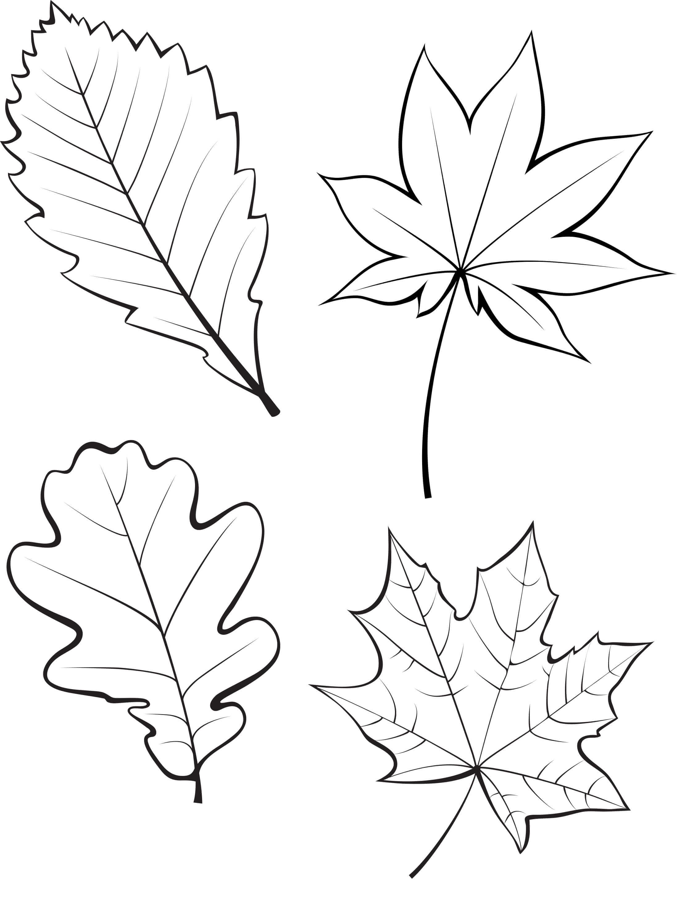 Шаблон для вырезания Осенний лист