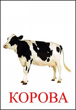 Корова картинка для детей