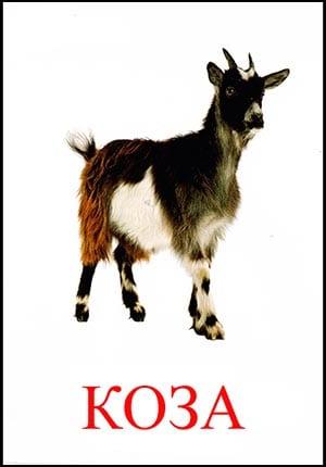 Коза картинка для детей